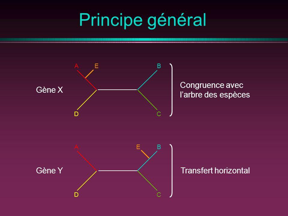 Principe général Gène X Gène Y AB CD E AB CD E Congruence avec larbre des espèces Transfert horizontal