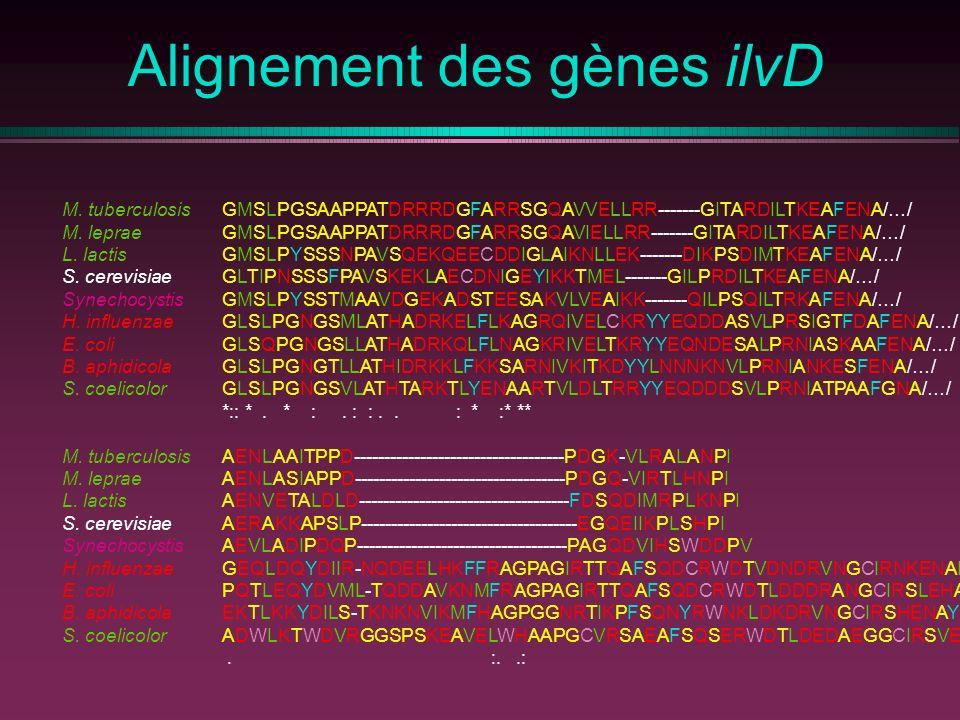 Alignement des gènes ilvD M. tuberculosisGMSLPGSAAPPATDRRRDGFARRSGQAVVELLRR-------GITARDILTKEAFENA/…/ M. lepraeGMSLPGSAAPPATDRRRDGFARRSGQAVIELLRR-----