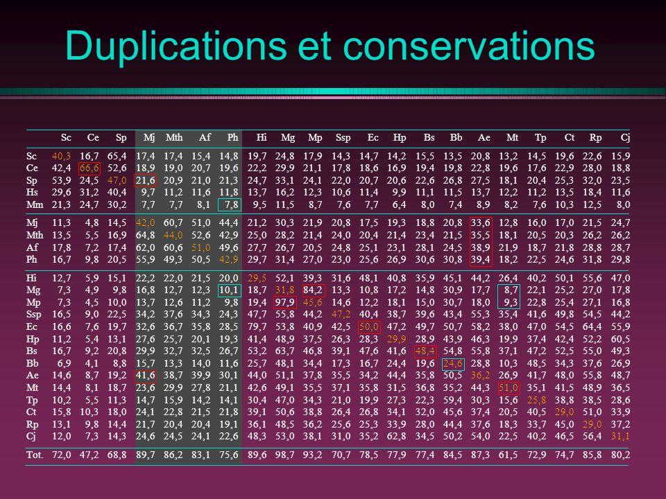 Duplications et conservations Sc Ce Sp Hs Mm Mj Mth Af Ph Hi Mg Mp Ssp Ec Hp Bs Bb Ae Mt Tp Ct Rp Cj Tot.
