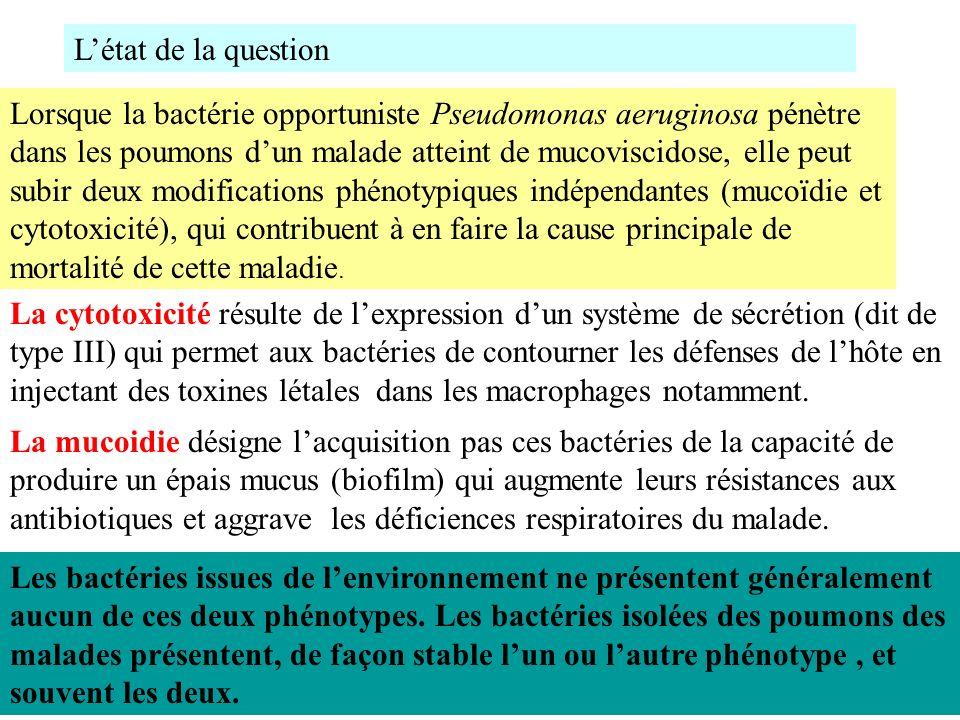 Lorsque la bactérie opportuniste Pseudomonas aeruginosa pénètre dans les poumons dun malade atteint de mucoviscidose, elle peut subir deux modificatio