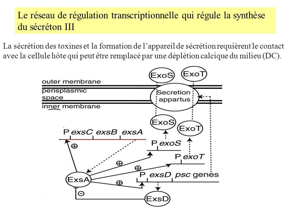 Le réseau de régulation transcriptionnelle qui régule la synthèse du sécréton III La sécrétion des toxines et la formation de lappareil de sécrétion r