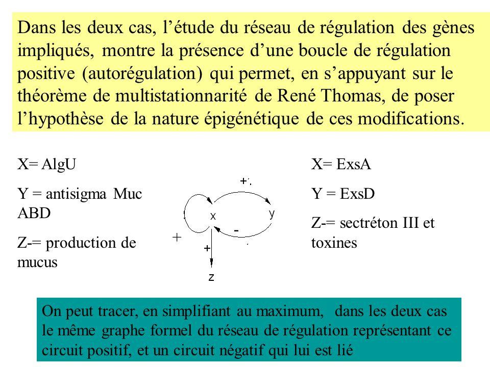 Dans les deux cas, létude du réseau de régulation des gènes impliqués, montre la présence dune boucle de régulation positive (autorégulation) qui perm