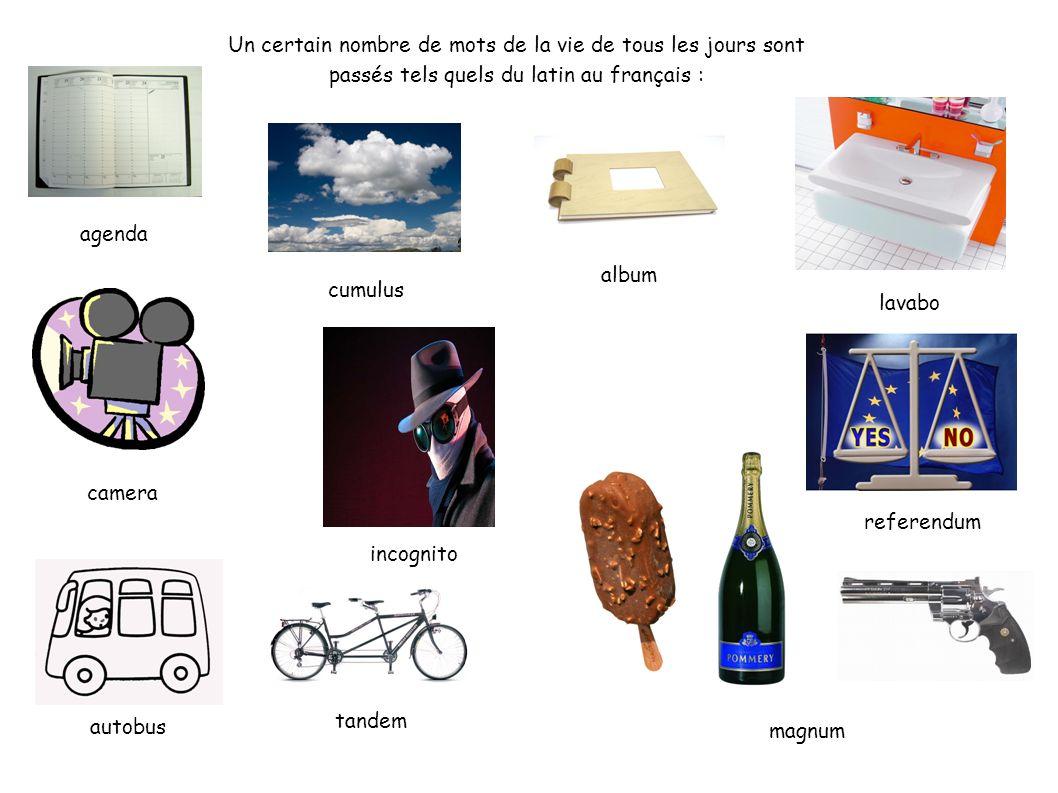Un certain nombre de mots de la vie de tous les jours sont passés tels quels du latin au français : agenda album autobus camera cumulus incognito lava
