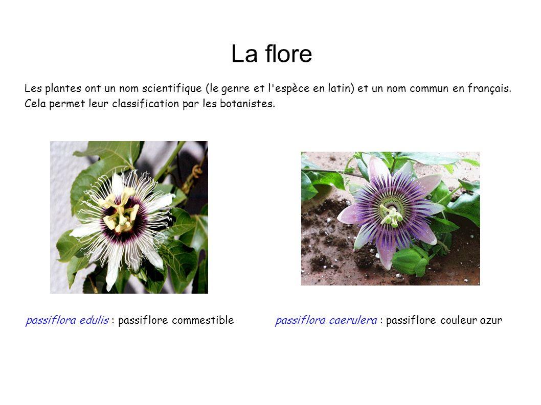 La flore passiflora edulis : passiflore commestiblepassiflora caerulera : passiflore couleur azur Les plantes ont un nom scientifique (le genre et l'e