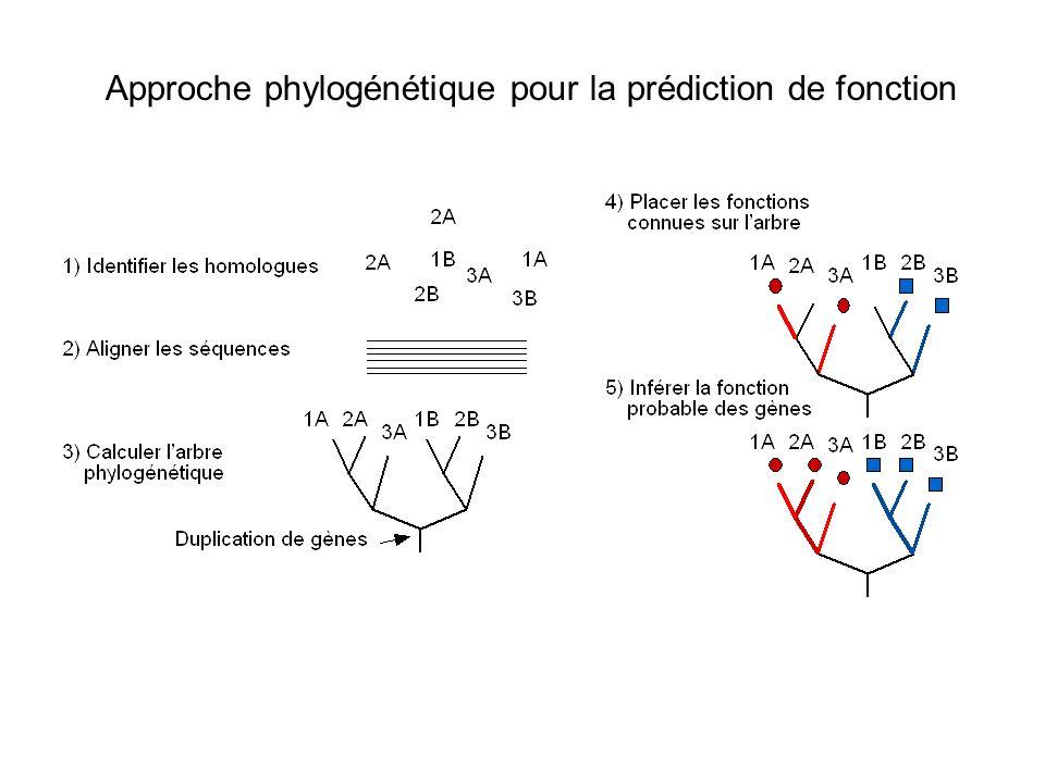 Approche phylogénétique pour la prédiction de fonction