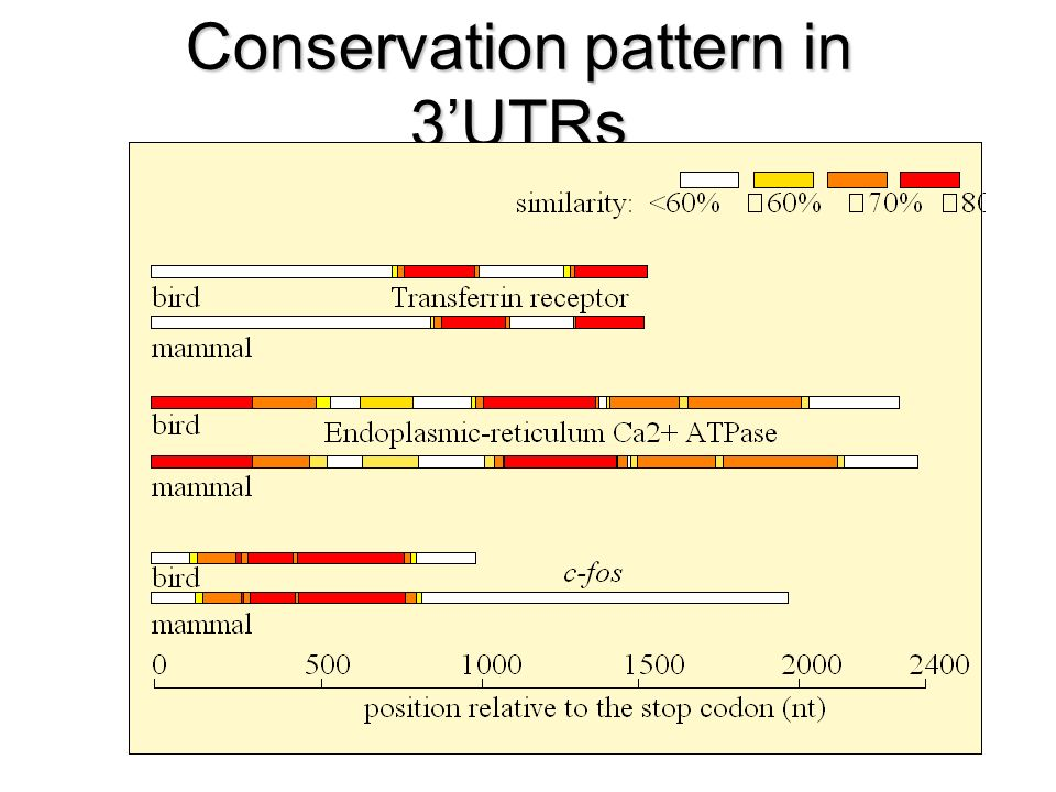 Conservation pattern in 3UTRs