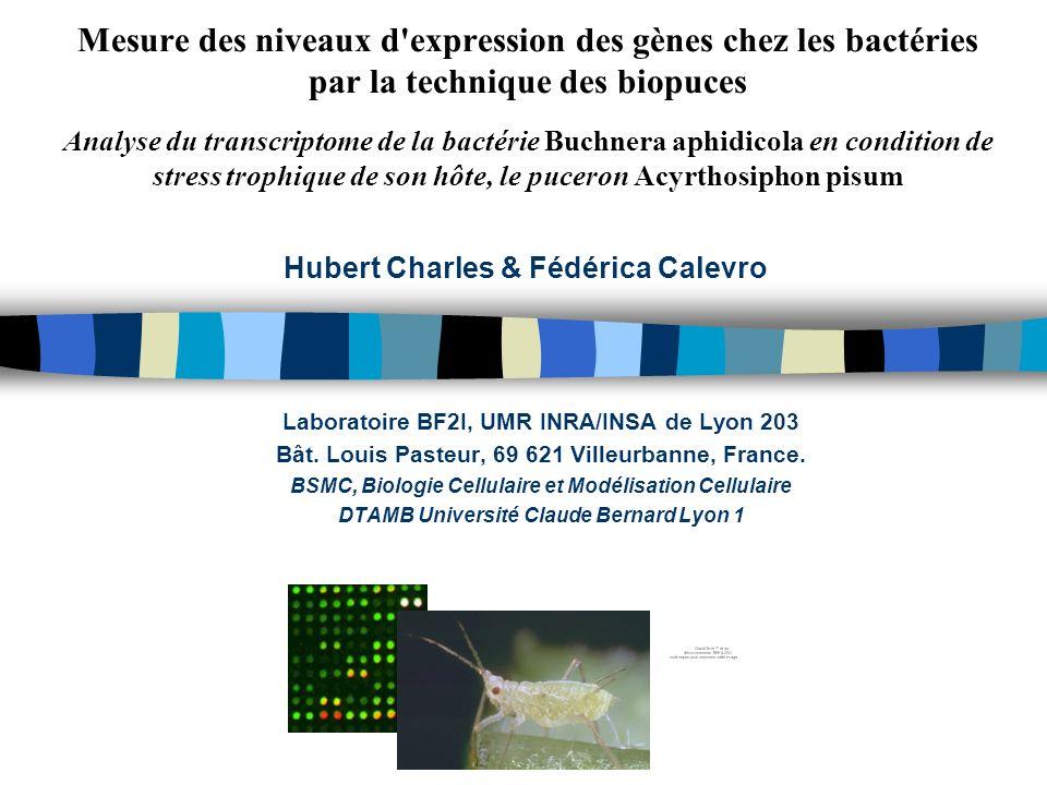 Mesure des niveaux d expression des gènes chez les bactéries par la technique des biopuces Analyse du transcriptome de la bactérie Buchnera aphidicola en condition de stress trophique de son hôte, le puceron Acyrthosiphon pisum Laboratoire BF2I, UMR INRA/INSA de Lyon 203 Bât.