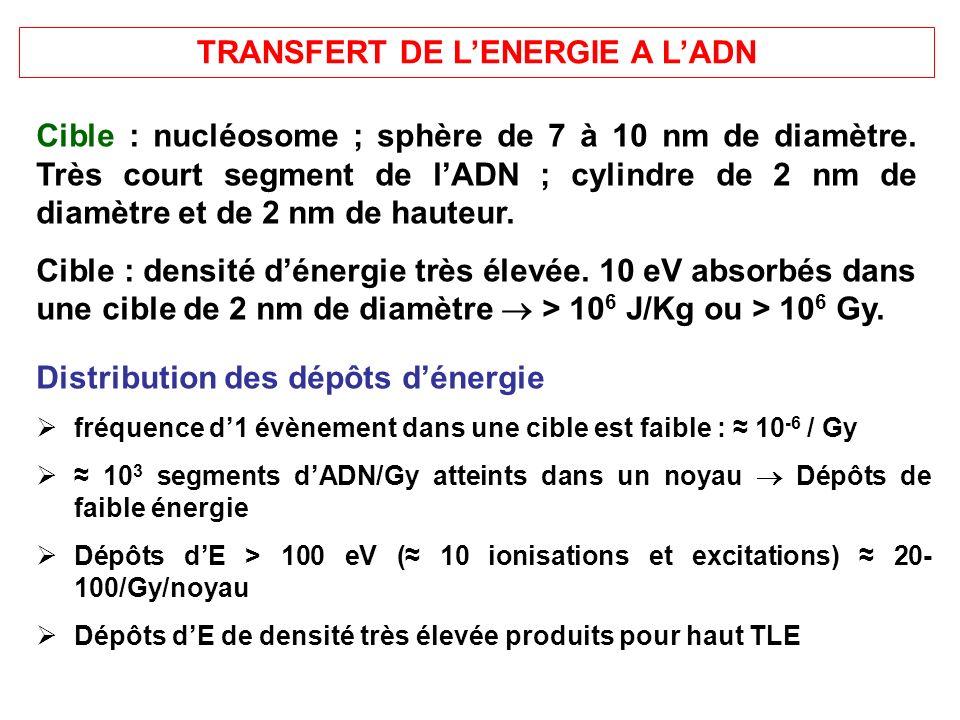 TRANSFERT DE LENERGIE A LADN Cible : nucléosome ; sphère de 7 à 10 nm de diamètre. Très court segment de lADN ; cylindre de 2 nm de diamètre et de 2 n