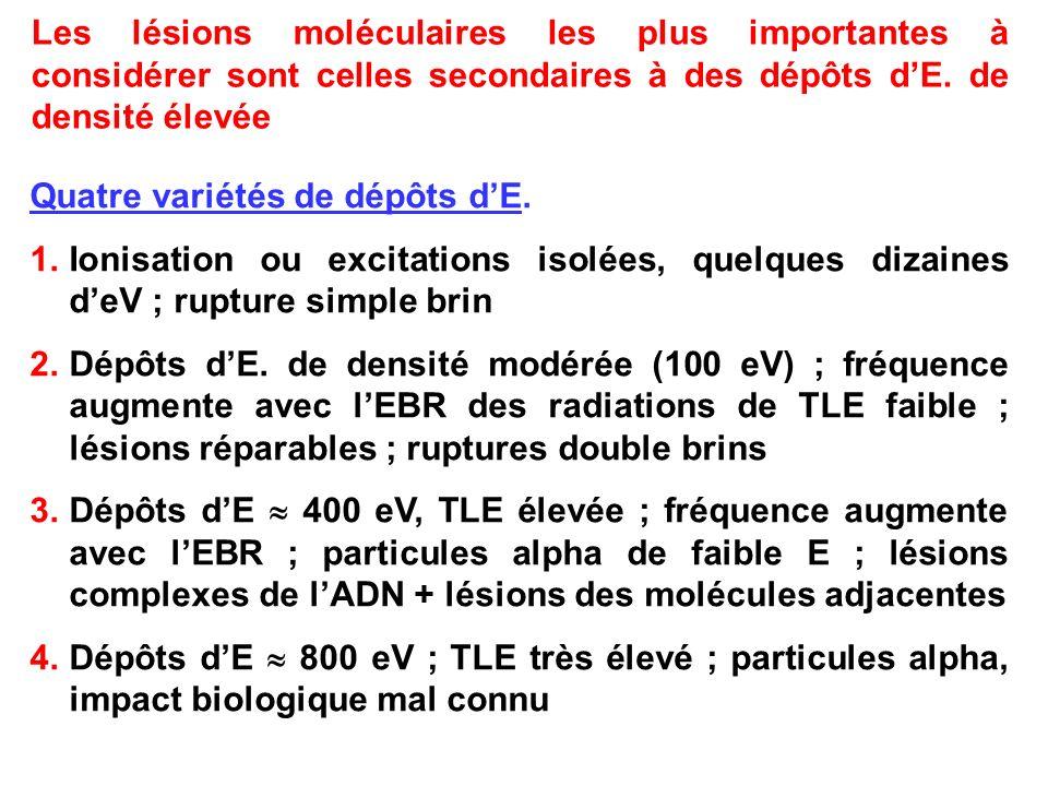 Les lésions moléculaires les plus importantes à considérer sont celles secondaires à des dépôts dE. de densité élevée Quatre variétés de dépôts dE. 1.