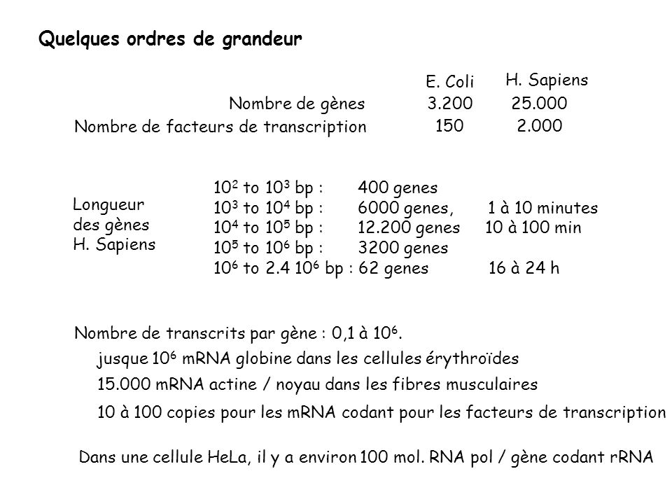 Quelques ordres de grandeur 10 2 to 10 3 bp : 400 genes 10 3 to 10 4 bp : 6000 genes, 1 à 10 minutes 10 4 to 10 5 bp : 12.200 genes 10 à 100 min 10 5