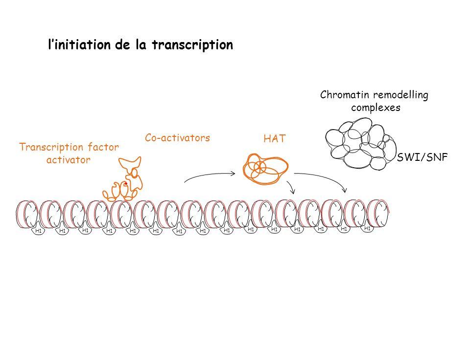H1 Transcription factor activator Co-activators HAT Chromatin remodelling complexes SWI/SNF H1 linitiation de la transcription