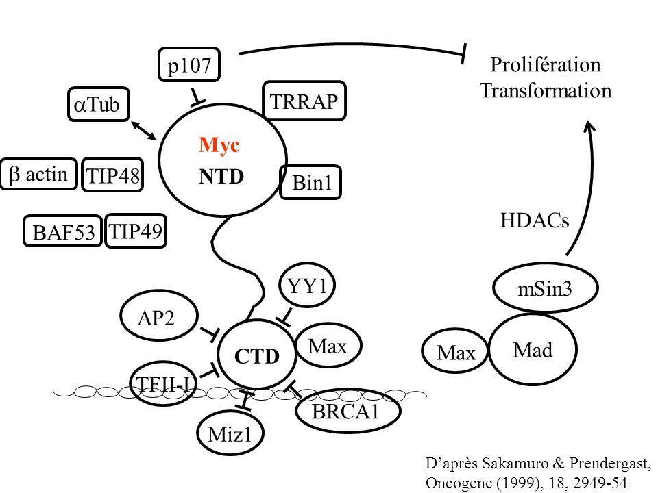 NTD CTD Daprès Sakamuro & Prendergast, Oncogene (1999), 18, 2949-54 TRRAP Bin1 p107 Tub AP2 TFII-I Miz1 BRCA1 MaxYY1 TIP48 TIP49 actin BAF53 Max Mad m