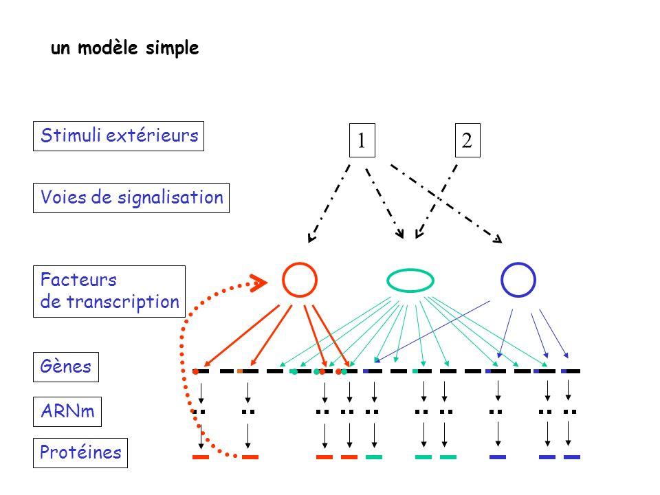 Stimuli extérieurs Voies de signalisation Facteurs de transcription Gènes Protéines ARNm 12 un modèle simple