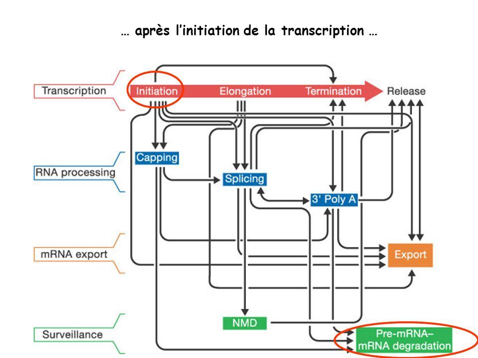 … après linitiation de la transcription …