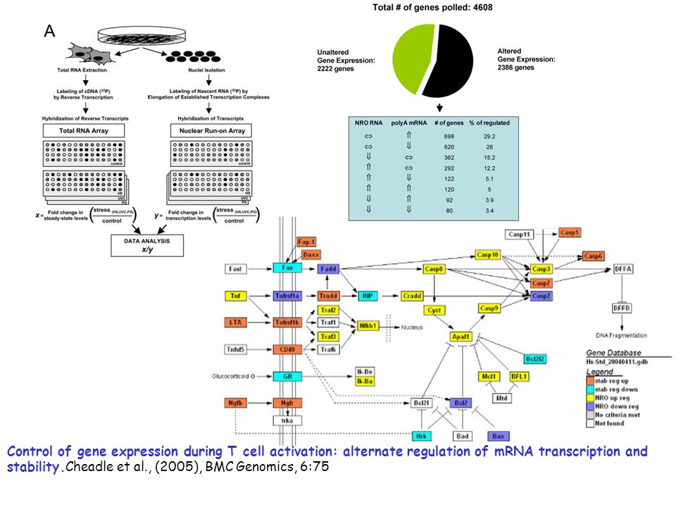 Control of gene expression during T cell activation: alternate regulation of mRNA transcription and stability.Cheadle et al., (2005), BMC Genomics, 6: