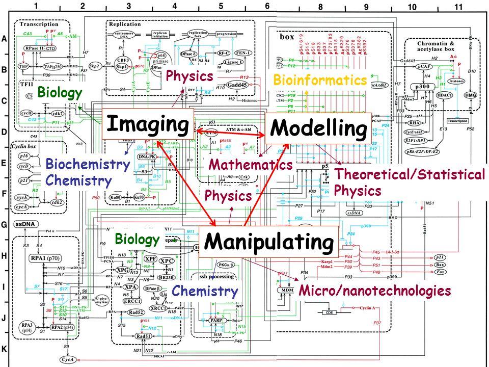 Biology Biochemistry Chemistry Physics Mathematics Theoretical/Statistical Physics Bioinformatics Physics Chemistry Biology Micro/nanotechnologies Ima