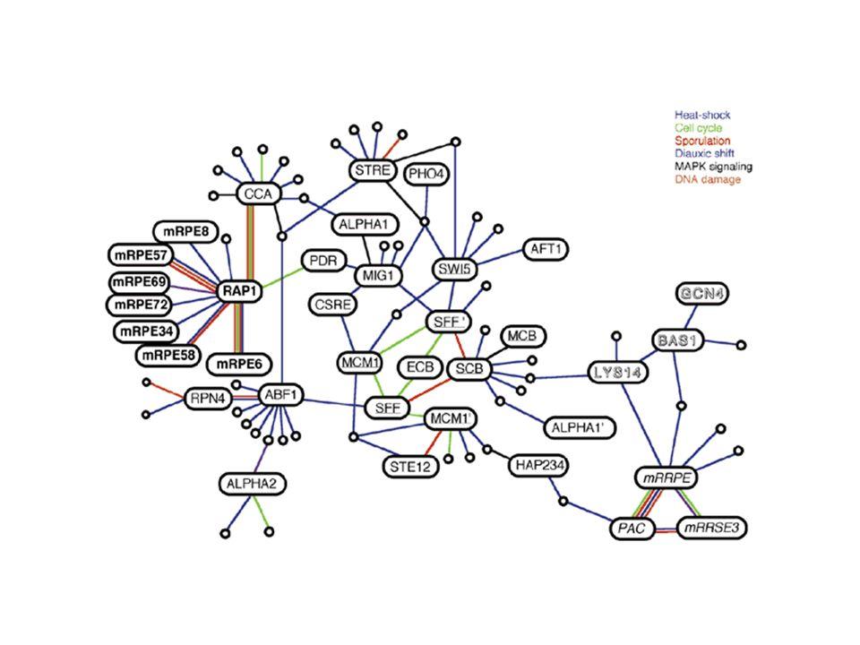 NTD CTD Daprès Sakamuro & Prendergast, Oncogene (1999), 18, 2949-54 TRRAP Bin1 p107 Tub AP2 TFII-I Miz1 BRCA1 MaxYY1 TIP48 TIP49 actin BAF53 Max Mad mSin3 Myc Prolifération Transformation HDACs