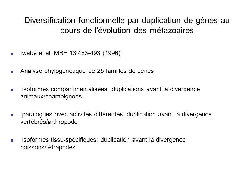 Diversification fonctionnelle par duplication de gènes au cours de l évolution des métazoaires Iwabe et al.