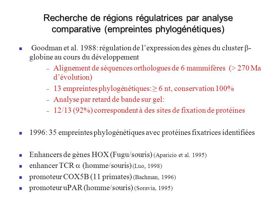 Recherche de régions régulatrices par analyse comparative (empreintes phylogénétiques) Goodman et al.