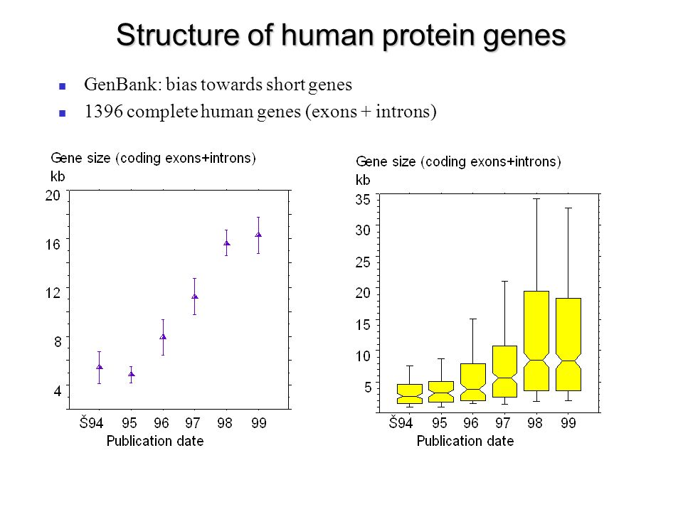 Structure of human protein genes GenBank: bias towards short genes 1396 complete human genes (exons + introns) 9268 complete human mRNA