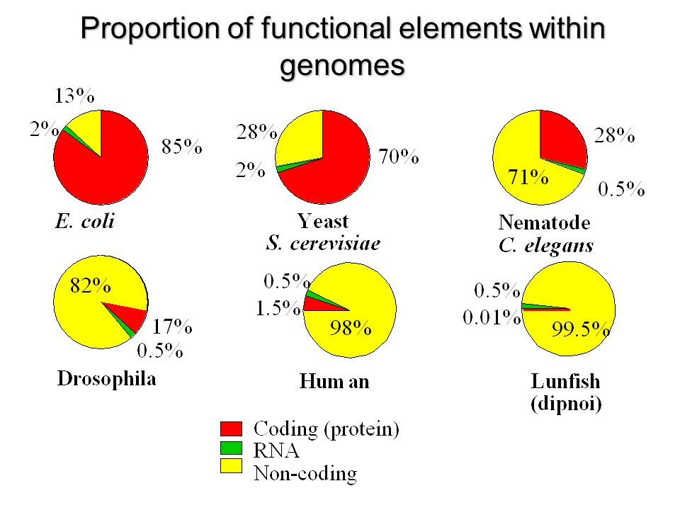 Proportion of functional elements within genomes