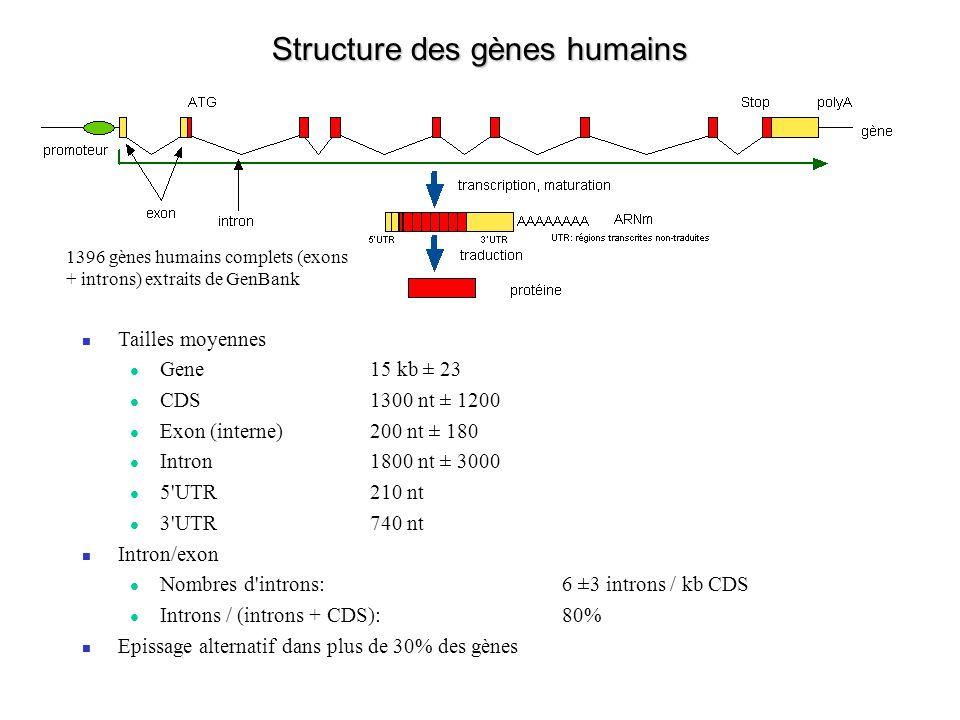 Structure des gènes humains Tailles moyennes Gene15 kb ± 23 CDS1300 nt ± 1200 Exon (interne) 200 nt ± 180 Intron1800 nt ± 3000 5'UTR210 nt 3'UTR740 nt