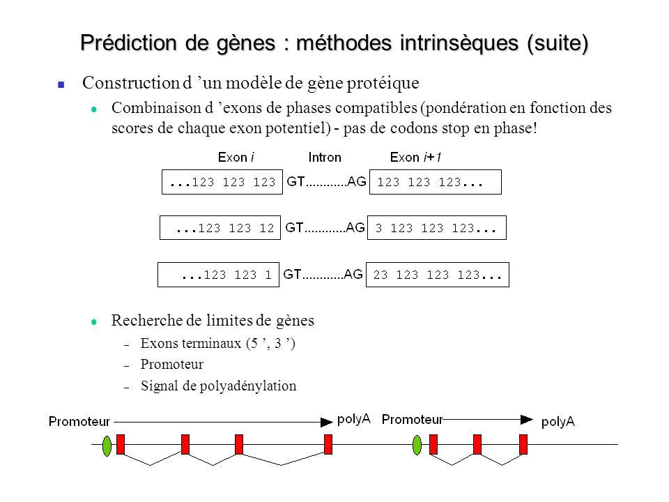 Prédiction de gènes : méthodes intrinsèques (suite) Construction d un modèle de gène protéique Combinaison d exons de phases compatibles (pondération