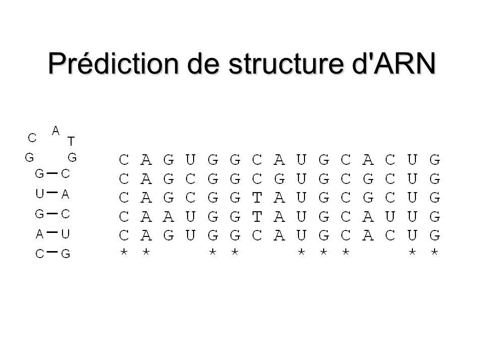 Prédiction de structure d ARN