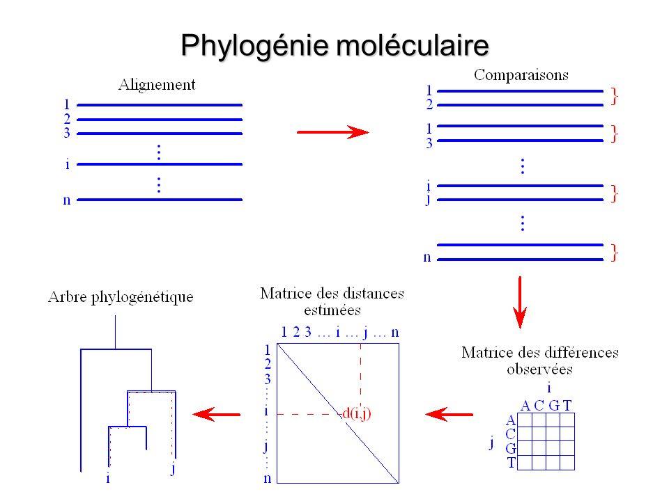 Phylogénie moléculaire