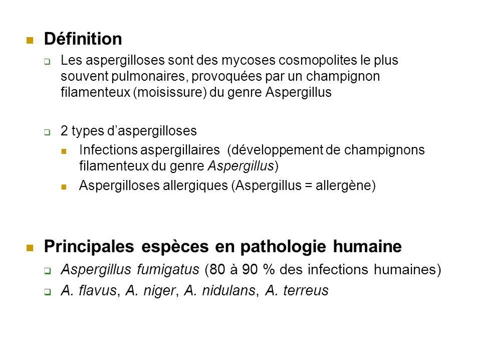 Définition Les aspergilloses sont des mycoses cosmopolites le plus souvent pulmonaires, provoquées par un champignon filamenteux (moisissure) du genre Aspergillus 2 types daspergilloses Infections aspergillaires (développement de champignons filamenteux du genre Aspergillus) Aspergilloses allergiques (Aspergillus = allergène) Principales espèces en pathologie humaine Aspergillus fumigatus (80 à 90 % des infections humaines) A.