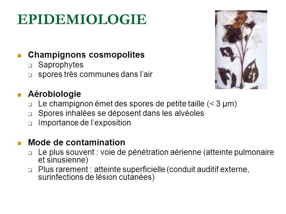 EPIDEMIOLOGIE Champignons cosmopolites Saprophytes spores très communes dans lair Aérobiologie Le champignon émet des spores de petite taille (< 3 µm) Spores inhalées se déposent dans les alvéoles Importance de lexposition Mode de contamination Le plus souvent : voie de pénétration aérienne (atteinte pulmonaire et sinusienne) Plus rarement : atteinte superficielle (conduit auditif externe, surinfections de lésion cutanées)