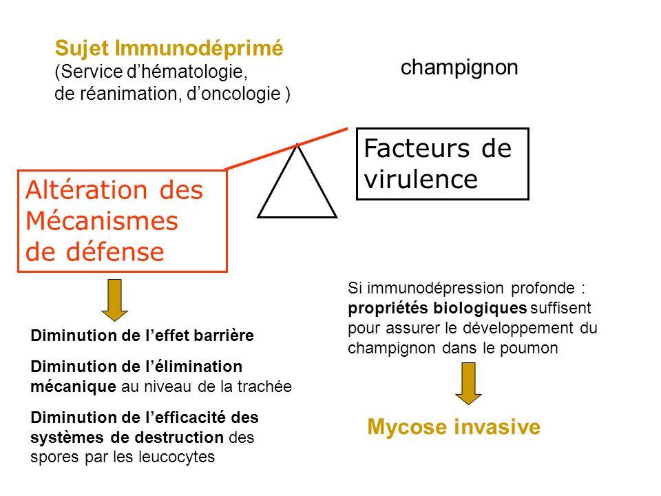 Altération des Mécanismes de défense Facteurs de virulence Sujet Immunodéprimé (Service dhématologie, de réanimation, doncologie ) champignon Diminution de leffet barrière Diminution de lélimination mécanique au niveau de la trachée Diminution de lefficacité des systèmes de destruction des spores par les leucocytes Si immunodépression profonde : propriétés biologiques suffisent pour assurer le développement du champignon dans le poumon Mycose invasive