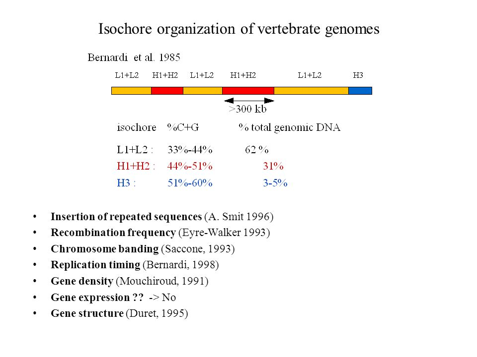 Isochore organization of vertebrate genomes Insertion of repeated sequences (A. Smit 1996) Recombination frequency (Eyre-Walker 1993) Chromosome bandi