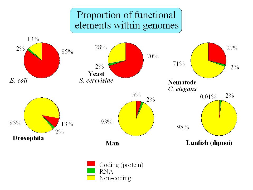 How many genes in the human genome ? Fields et al. 1994