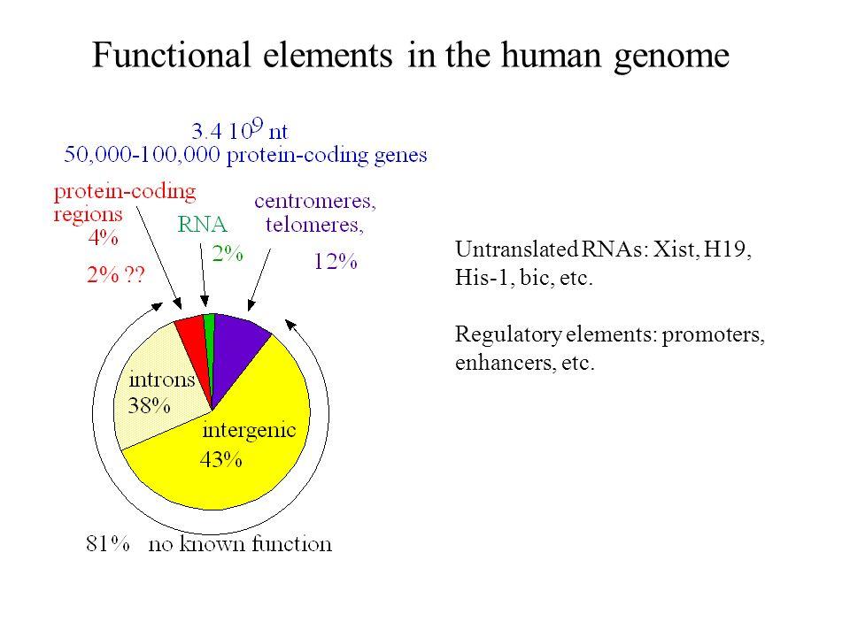 La déamination des cytosines Cytosine N C CH C N H NH 2 O CH réparation Cytosine N C CH C N H NH 2 O CH Cytosine méthylée N C CH C N H NH 2 O CH CH 3 Uracile HN C CH C N H O O déamination Thymine HN C CH C N H O O CH 3 déamination TpG ou CpA