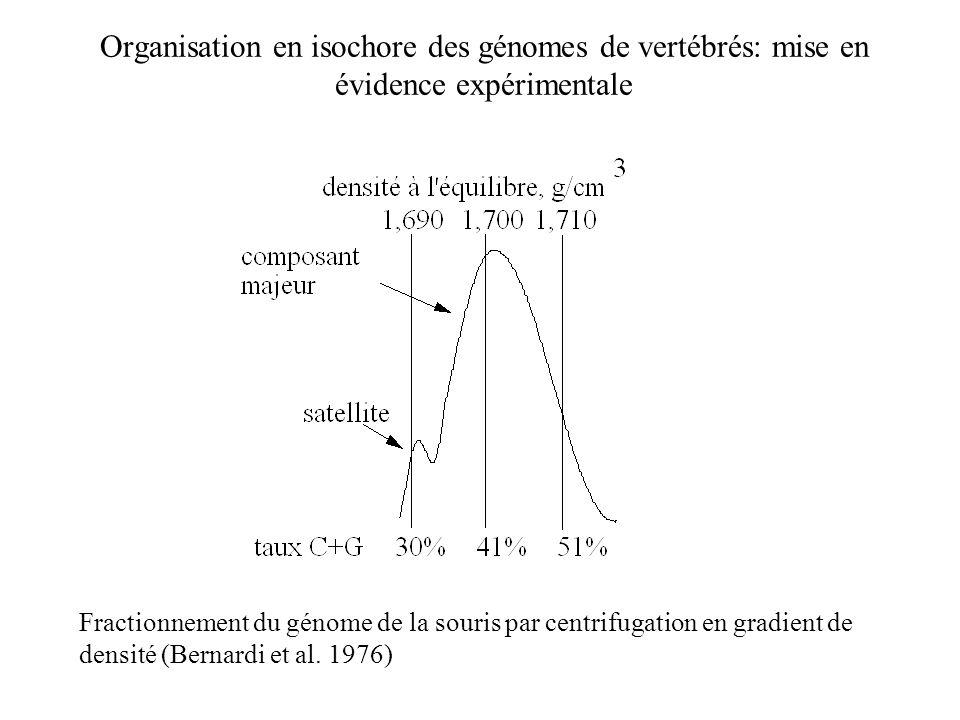Organisation en isochore des génomes de vertébrés: mise en évidence expérimentale Fractionnement du génome de la souris par centrifugation en gradient