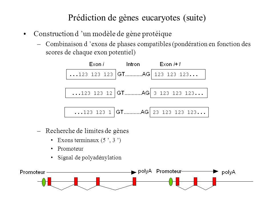 Prédiction de gènes eucaryotes (suite) Construction d un modèle de gène protéique –Combinaison d exons de phases compatibles (pondération en fonction