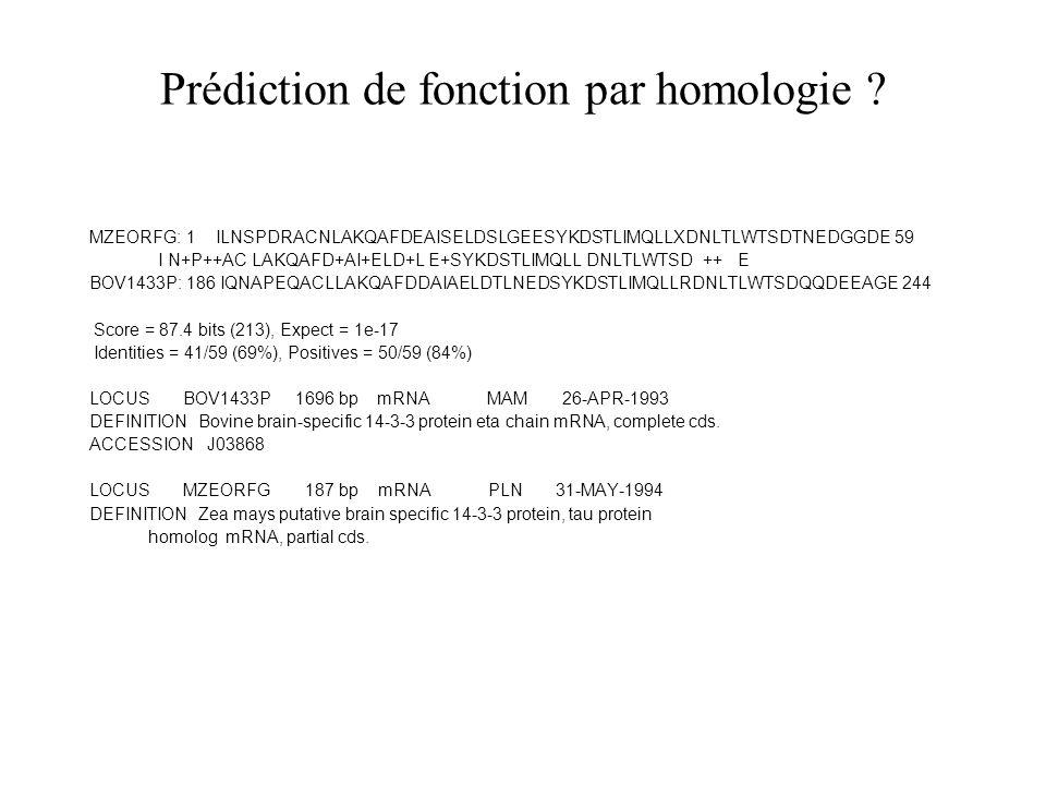 Prédiction de fonction par homologie ? MZEORFG: 1 ILNSPDRACNLAKQAFDEAISELDSLGEESYKDSTLIMQLLXDNLTLWTSDTNEDGGDE 59 I N+P++AC LAKQAFD+AI+ELD+L E+SYKDSTLI