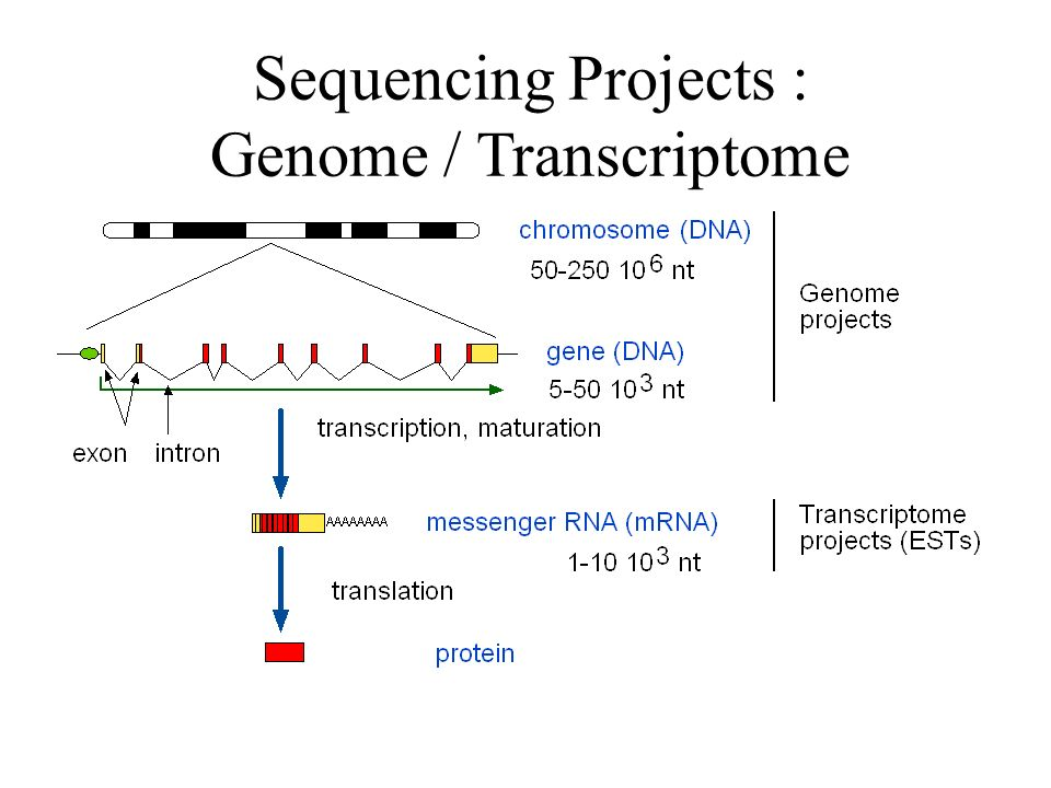 Sequencing Projects : Genome / Transcriptome