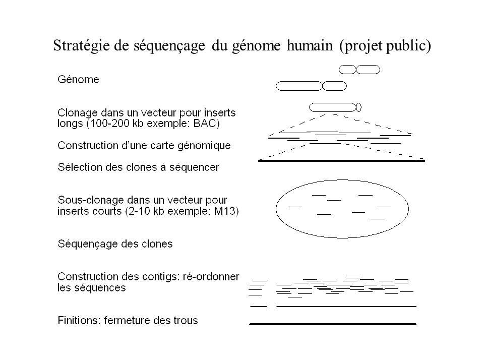 Stratégie de séquençage du génome humain (projet public)