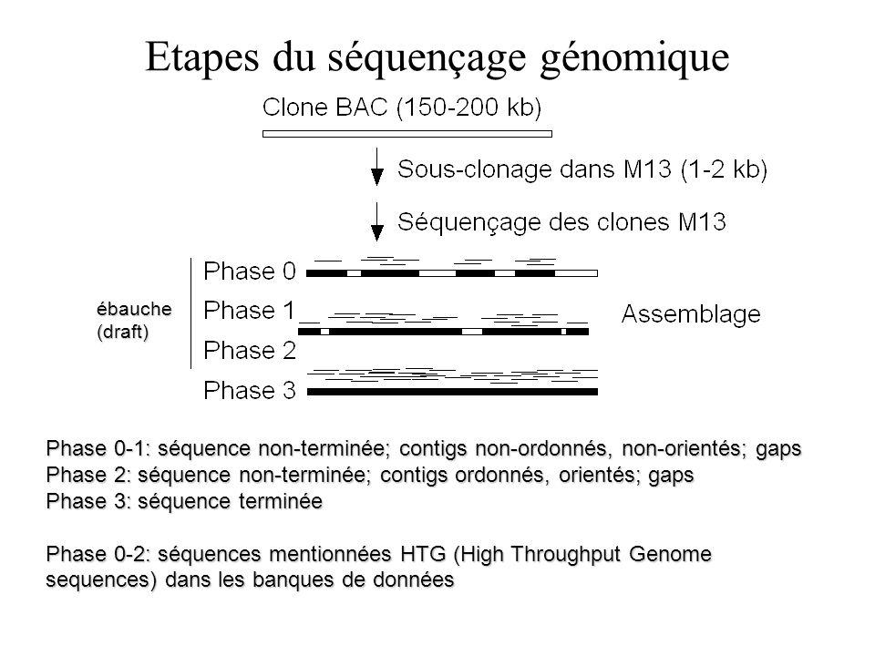 Etapes du séquençage génomique ébauche(draft) Phase 0-1: séquence non-terminée; contigs non-ordonnés, non-orientés; gaps Phase 2: séquence non-terminé