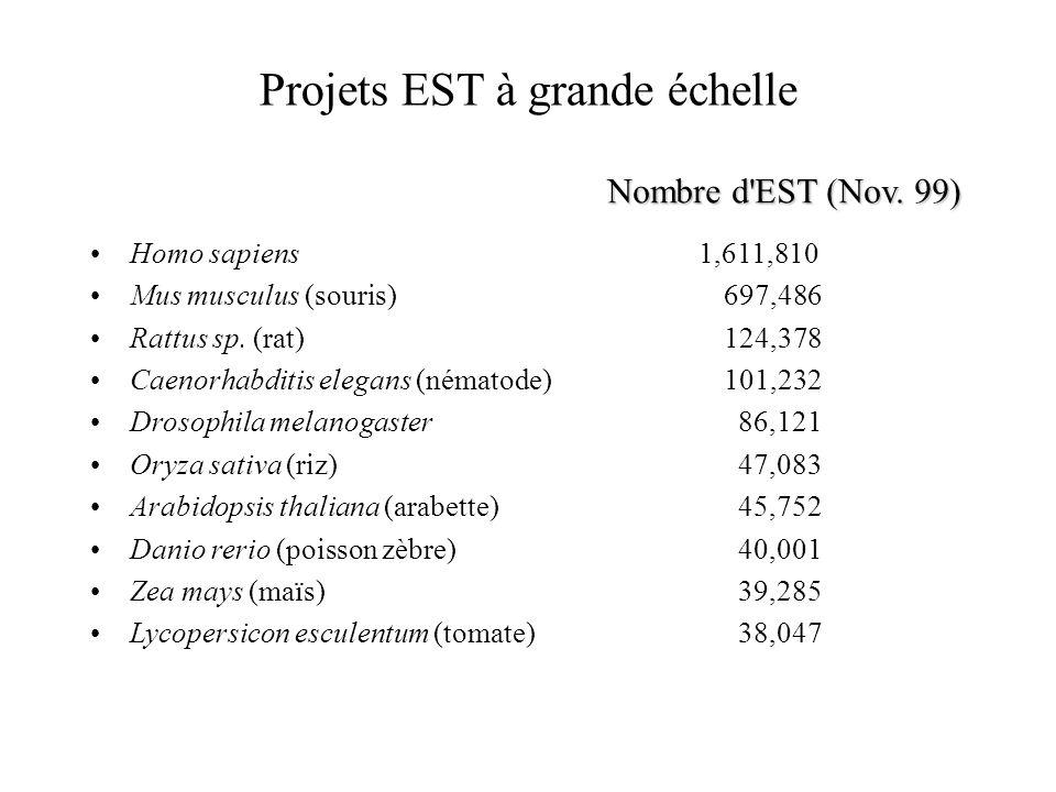 Projets EST à grande échelle Homo sapiens 1,611,810 Mus musculus (souris) 697,486 Rattus sp. (rat) 124,378 Caenorhabditis elegans (nématode) 101,232 D