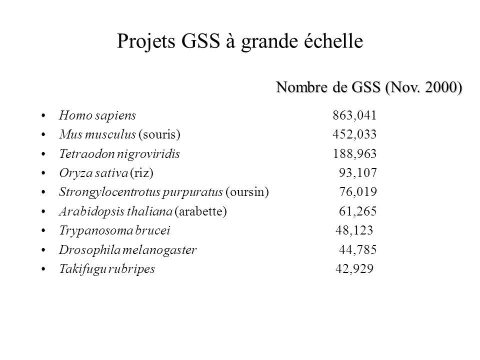 Projets GSS à grande échelle Homo sapiens 863,041 Mus musculus (souris) 452,033 Tetraodon nigroviridis 188,963 Oryza sativa (riz) 93,107 Strongylocent