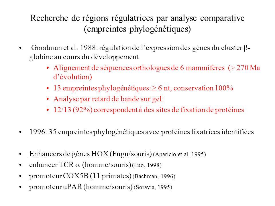 Recherche de régions régulatrices par analyse comparative (empreintes phylogénétiques) Goodman et al. 1988: régulation de lexpression des gènes du clu