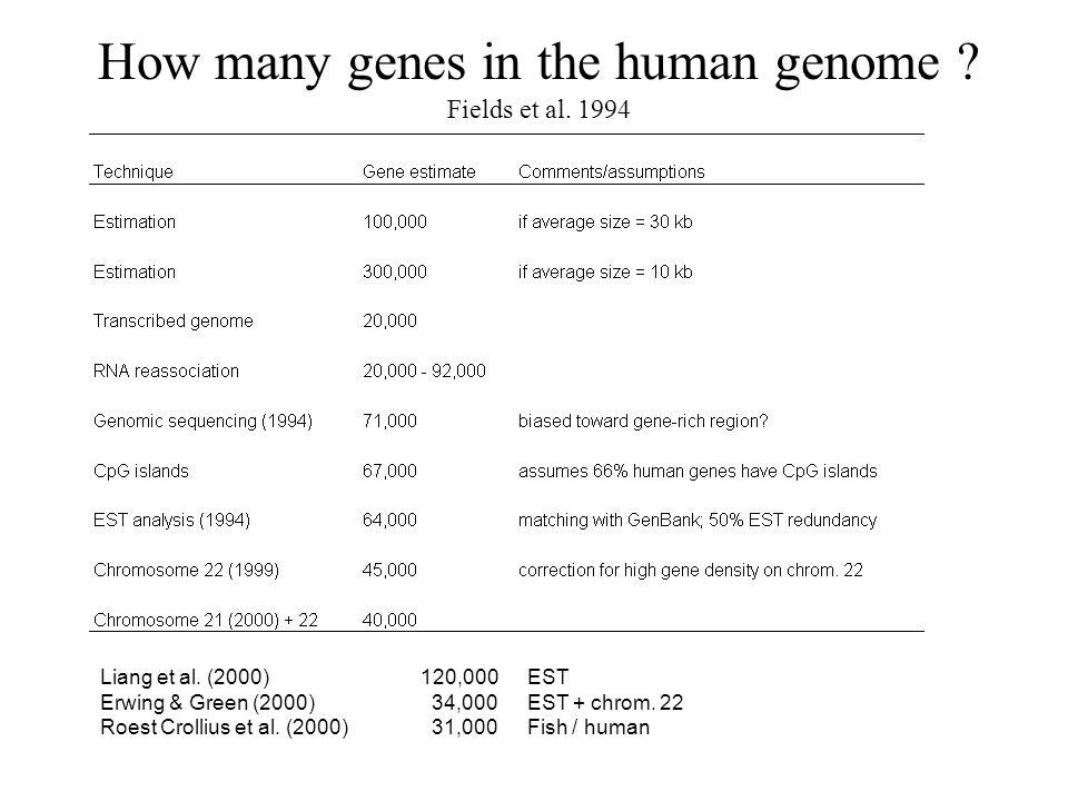 How many genes in the human genome ? Fields et al. 1994 Liang et al. (2000)120,000EST Erwing & Green (2000) 34,000 EST + chrom. 22 Roest Crollius et a