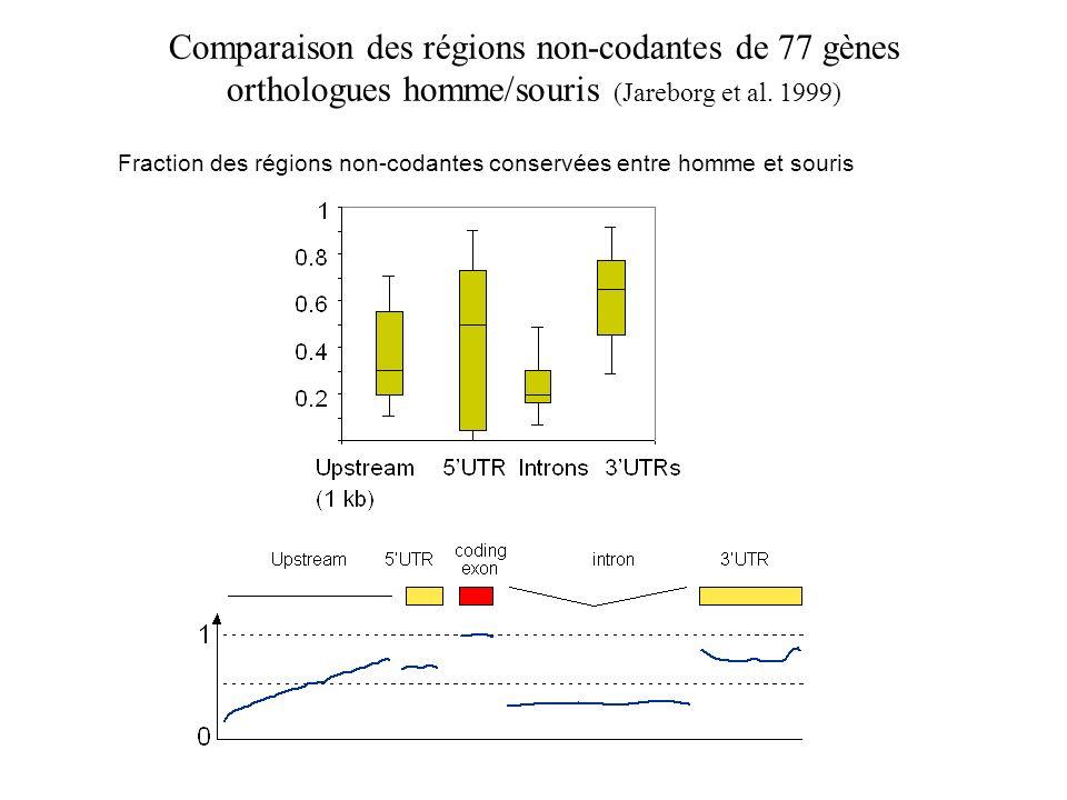 Comparaison des régions non-codantes de 77 gènes orthologues homme/souris (Jareborg et al. 1999) Fraction des régions non-codantes conservées entre ho