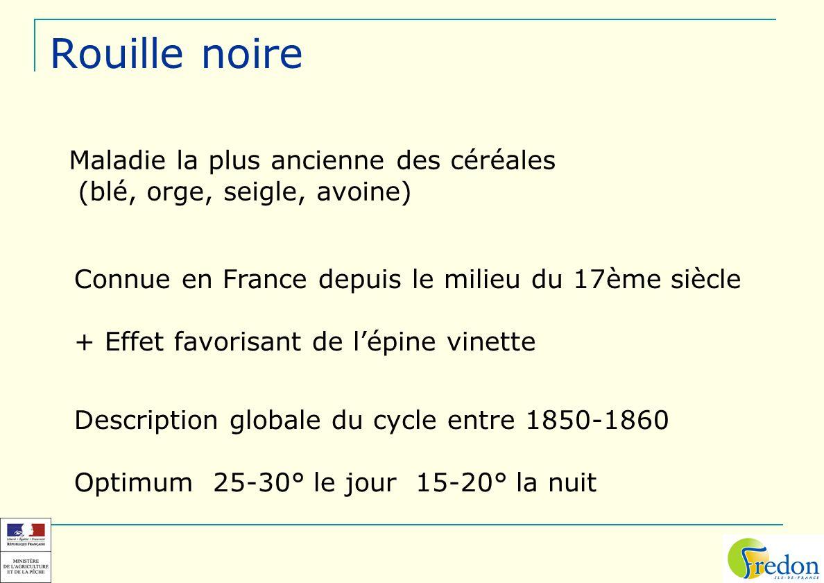 Maladie la plus ancienne des céréales (blé, orge, seigle, avoine) Connue en France depuis le milieu du 17ème siècle + Effet favorisant de lépine vinet