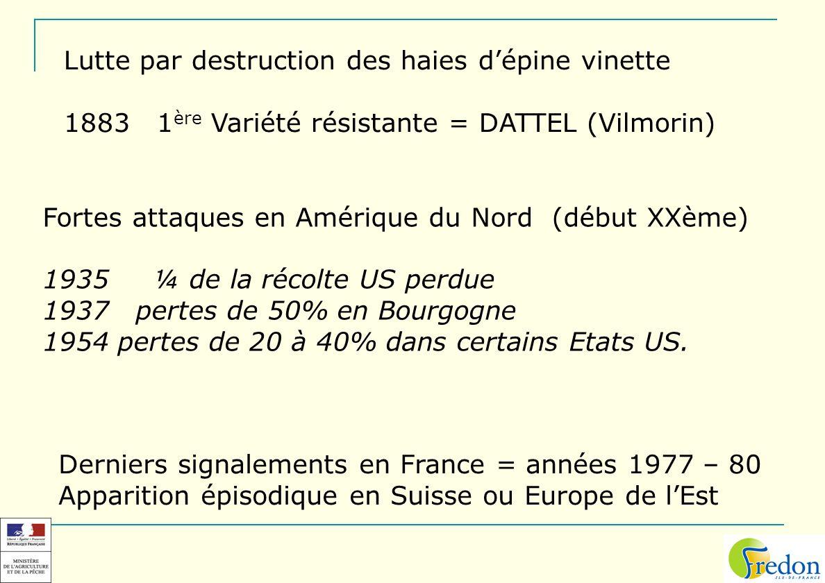 Lutte par destruction des haies dépine vinette 1883 1 ère Variété résistante = DATTEL (Vilmorin) Fortes attaques en Amérique du Nord (début XXème) 193