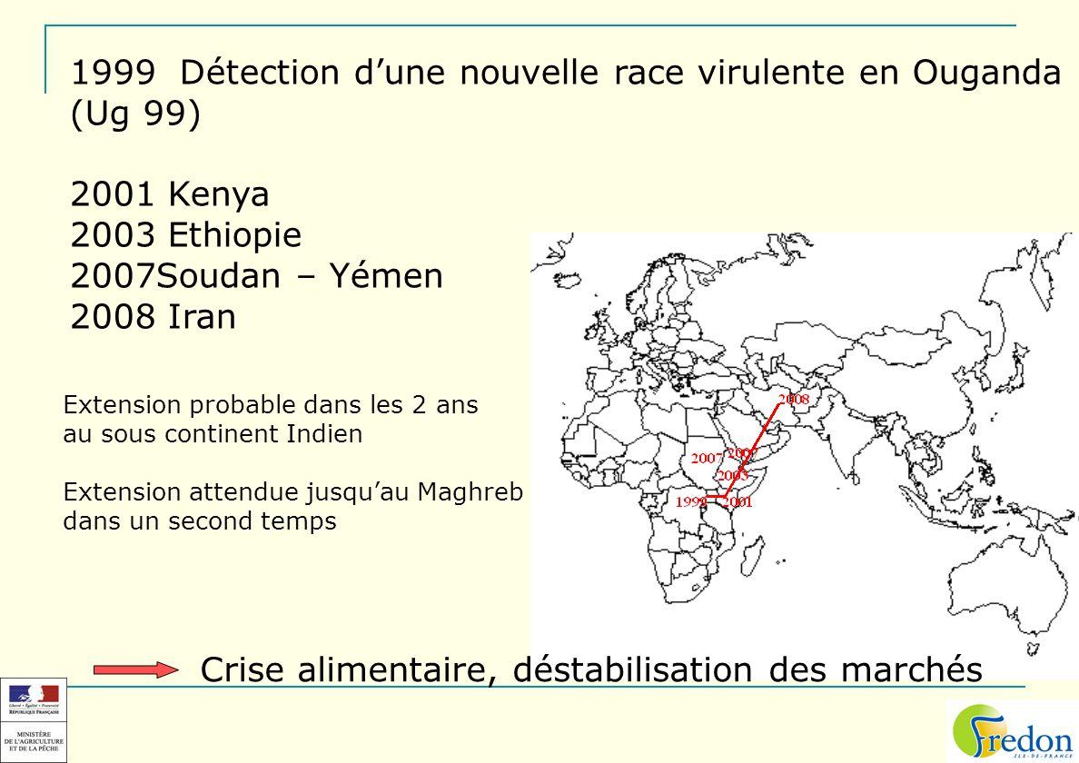 1999 Détection dune nouvelle race virulente en Ouganda (Ug 99) 2001 Kenya 2003 Ethiopie 2007Soudan – Yémen 2008 Iran Extension probable dans les 2 ans