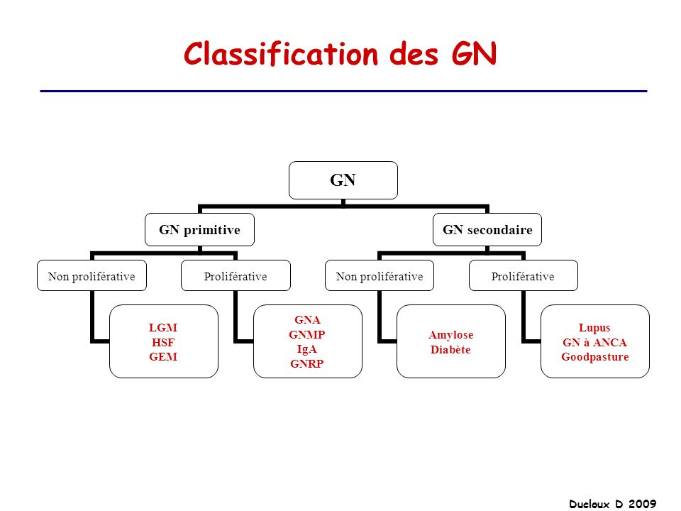 Ducloux D 2009 Classification des GN GN GN primitive Non proliférative LGM HSF GEM Proliférative GNA GNMP IgA GNRP GN secondaire Non proliférative Amy